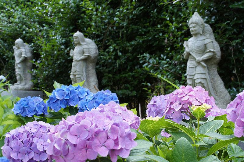 160618仏像とあじさい@妙音寺05