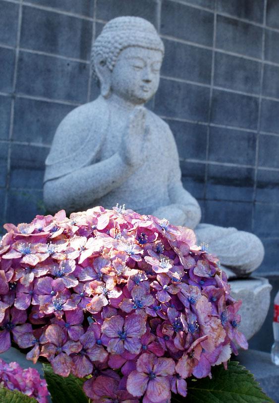 160618仏像とあじさい@妙音寺06