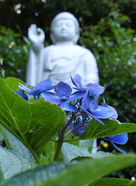 160618仏像とあじさい@妙音寺13