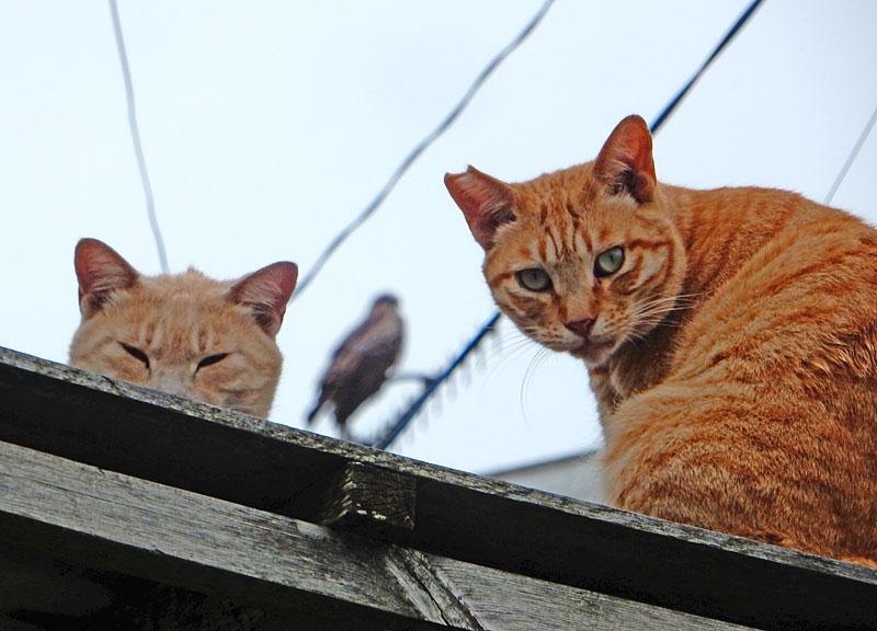 160612猫とトンビ2