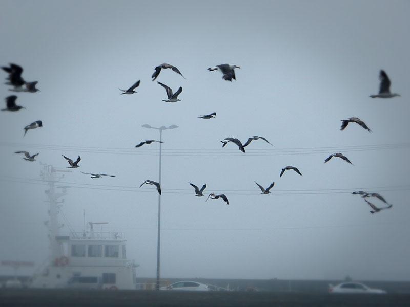 160702濃霧@久里浜港5