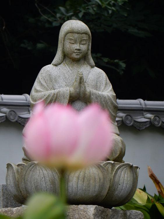 160716蓮とお地蔵 @ 妙音寺09