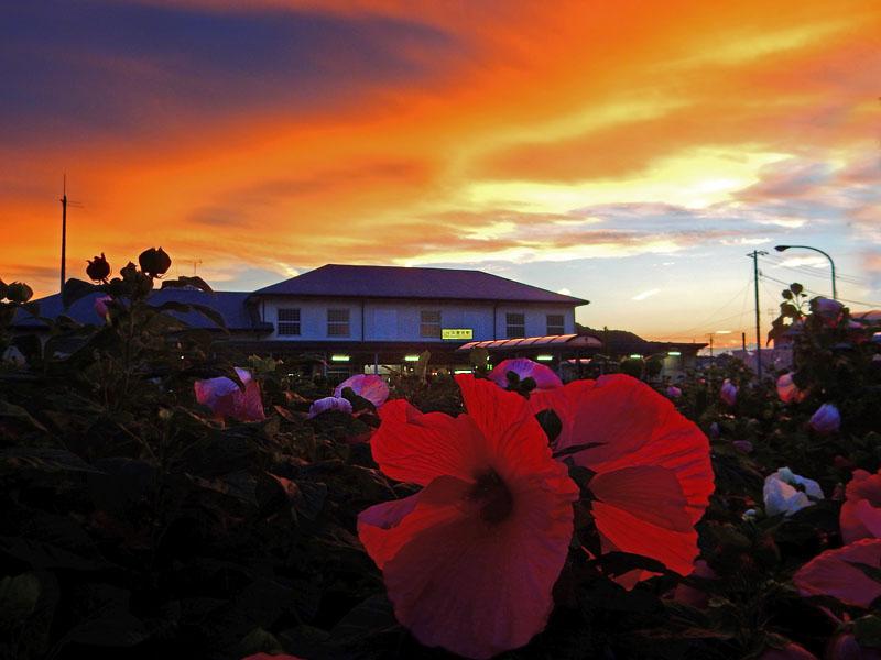 160728梅雨明けの夕焼けと芙蓉の花2