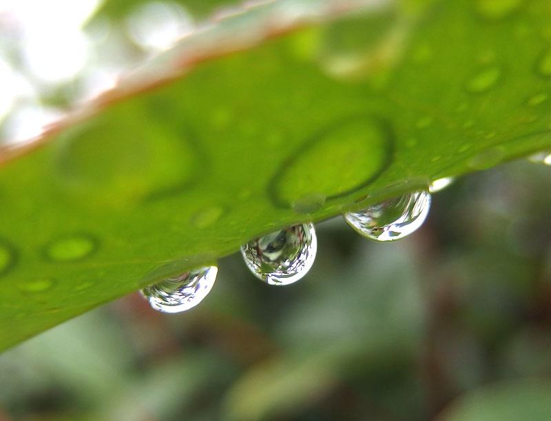 160911雨の日曜日2