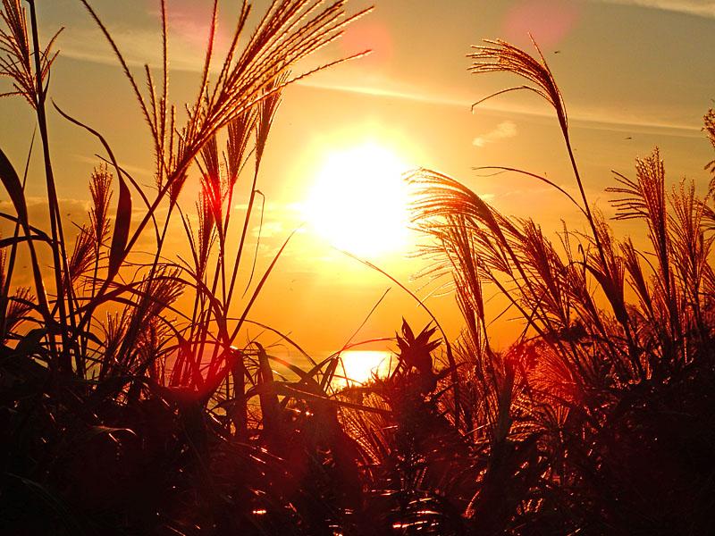 161016城ヶ島のススキと落陽5