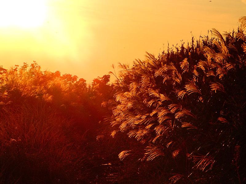 161016城ヶ島のススキと落陽4