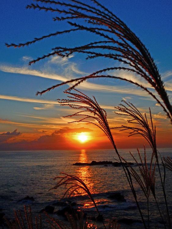 161016城ヶ島のススキと落陽8