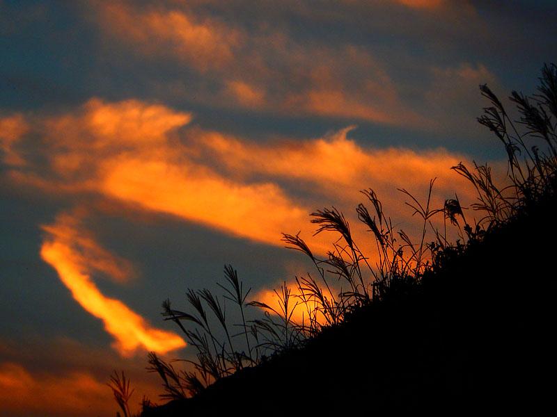 161016城ヶ島のススキと落陽7