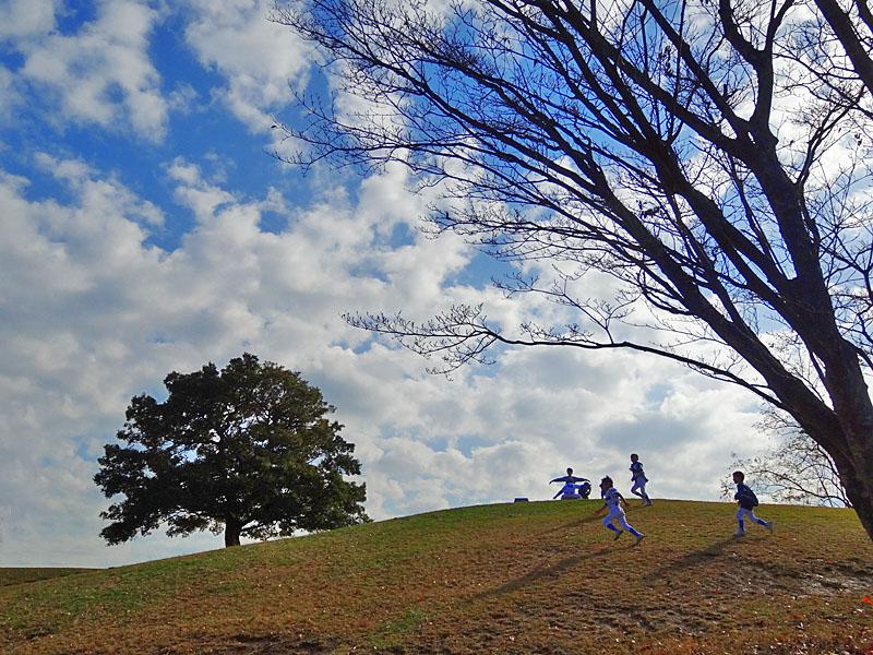 161126,榎の丘 初冬2