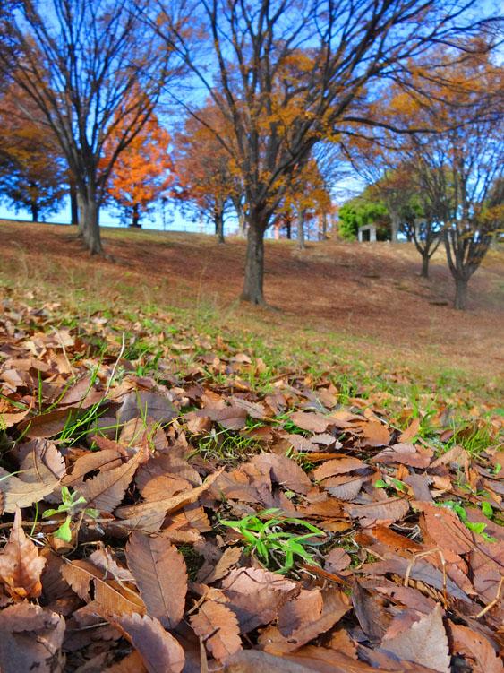 161203枯れ葉のシーズン2