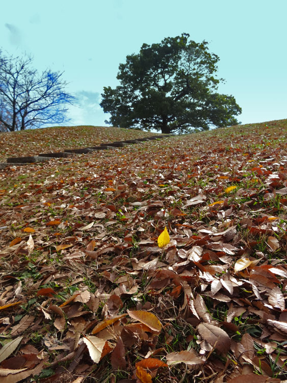 161203枯れ葉のシーズン1