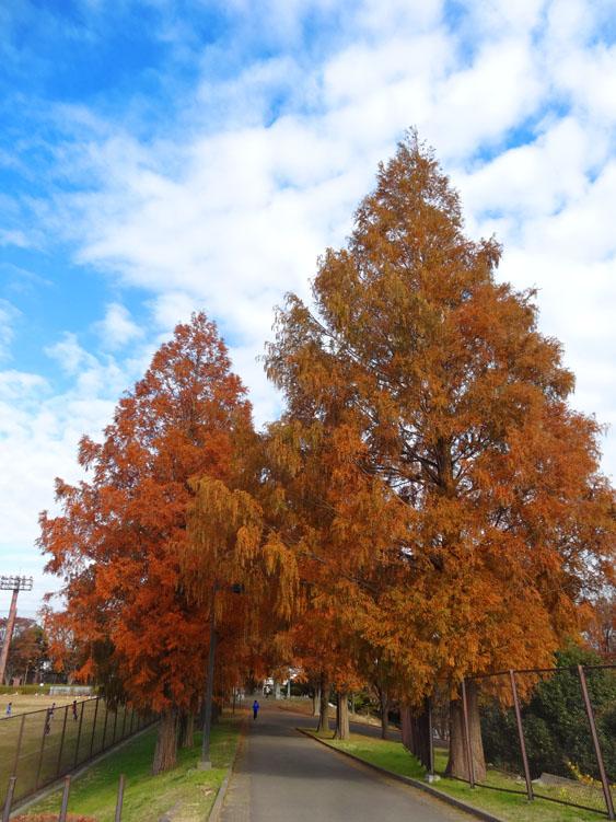 161203枯れ葉のシーズン3