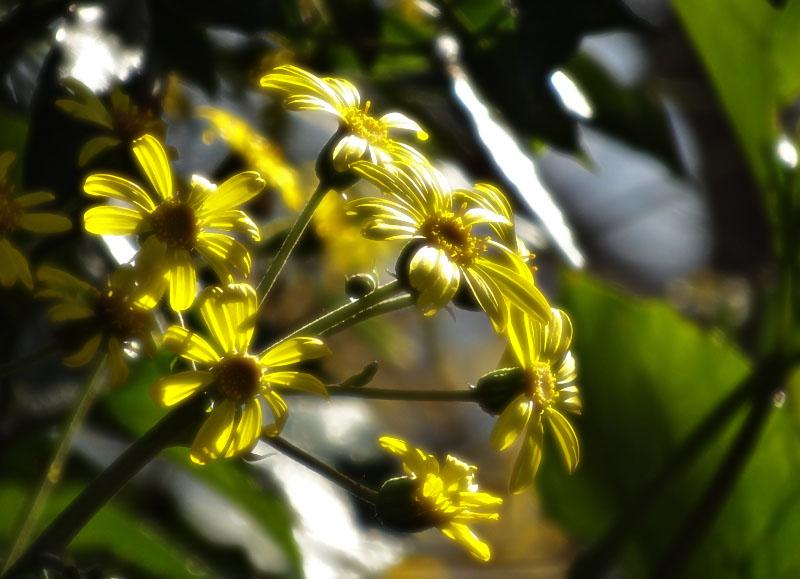 161221昼休みの花たち3
