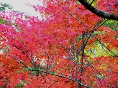 山中湖・紅葉まつりo_1