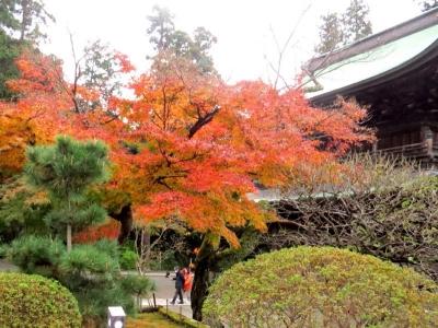 仏殿と紅葉a_1