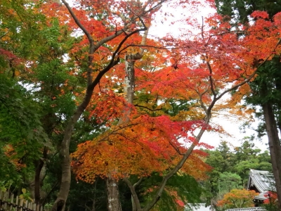 仏殿と紅葉b_1