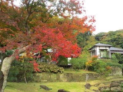 妙香池と紅葉a_1_1