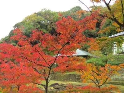 妙香池と紅葉c_1
