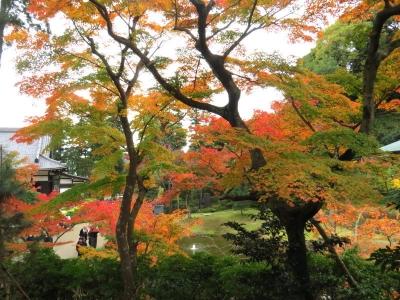 妙香池と紅葉d_1