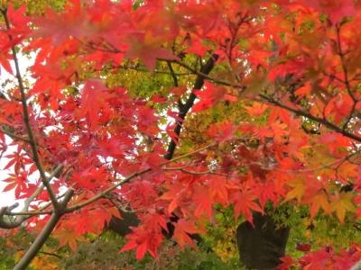 舎利殿と紅葉c_1