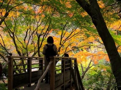 桂橋からの紅葉眺めa_1