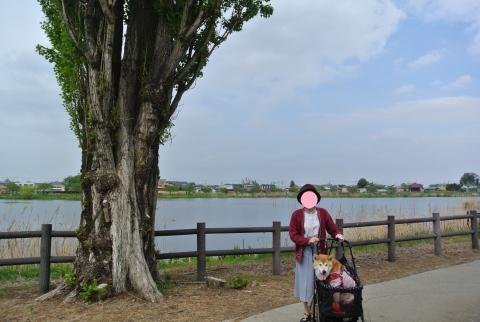 つつじが岡公園の沼