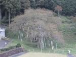 hidaichi10.jpg