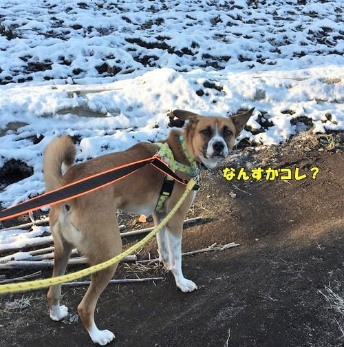 初雪チャーくん1