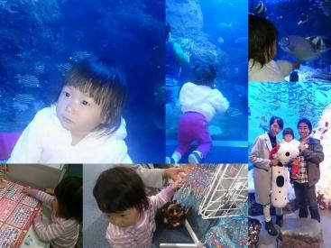20161206江の島水族館