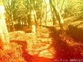紅葉(雰囲気)