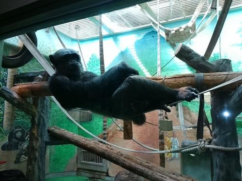 2807チンパンジー
