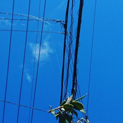 2811雲の巣