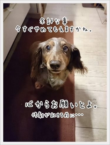 fc2_2016-11-11_04.jpg