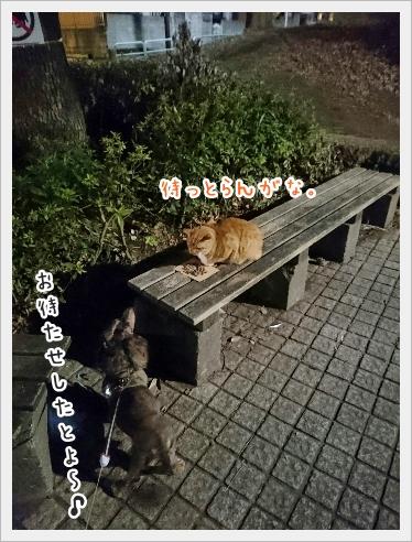 fc2_2016-12-22_01.jpg