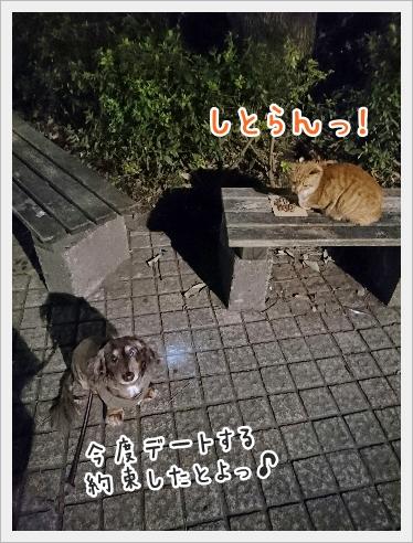 fc2_2016-12-22_04.jpg