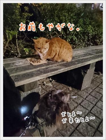 fc2_2016-12-22_05.jpg
