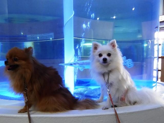 20160811ポンころ水族館④