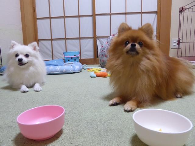 20160919ポンころ柿②