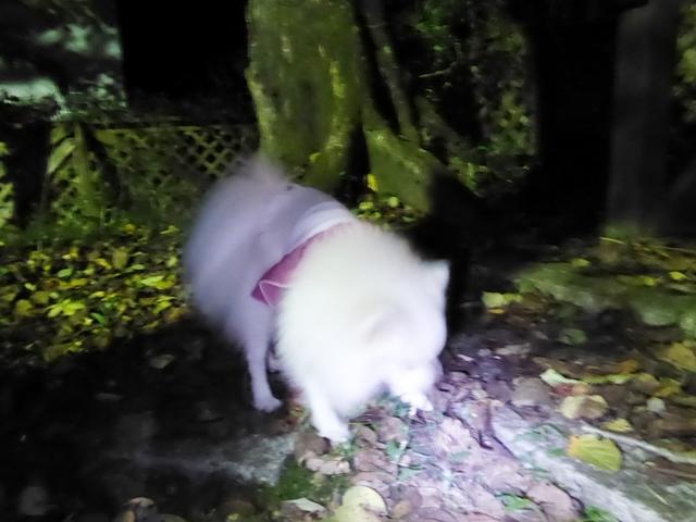 20161007ポンころ那須夕飯①
