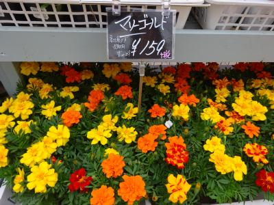 ロイヤルホームセンター南千住店OPEN!(画像)