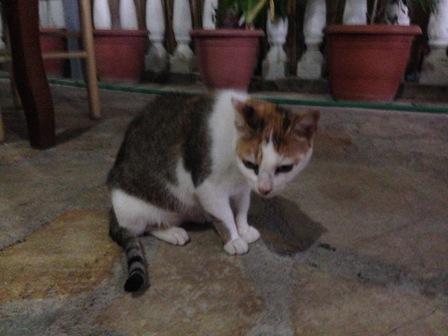 妖怪人間ベラ猫