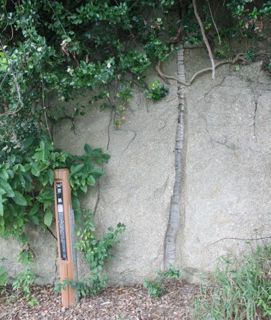 IMG_5759 岩脈(542x640)
