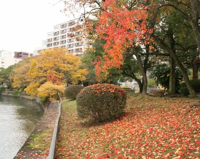 IMG_6674 京橋川左岸(640x510)