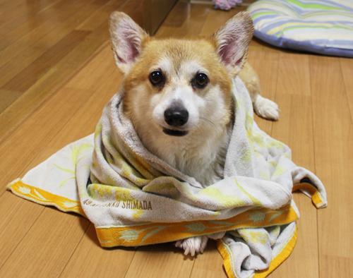 お風呂でした