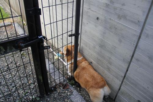 肥満測定ゲート