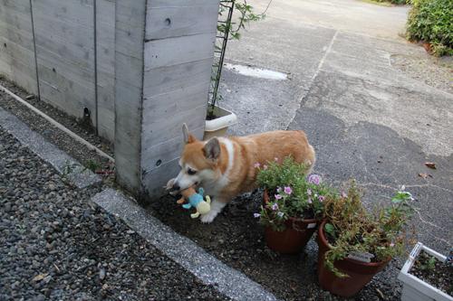 お花のゲート