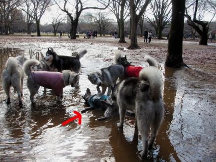 クリスマス泥んこ会