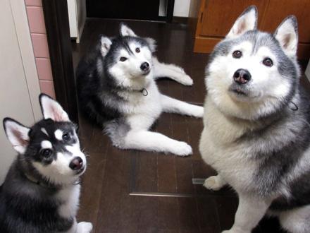在りし日の三兄弟