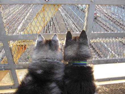 ふたりで電車観察