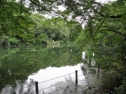 朝の井の頭公園